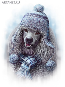 poodle_in_hat