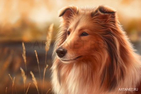 dog_collie