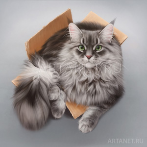 maine_coon_cat