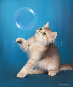 kitten_and_bubble