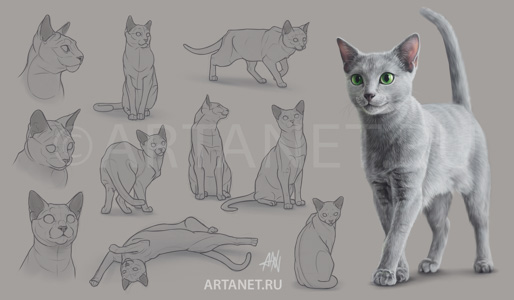russian_blue_cat